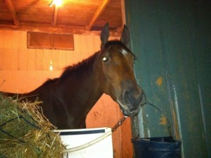 Egypitan Femme settled in nicely to her stall at Santa Anita on the eve of her run in the $100,000 Surfer Girl Stakes.